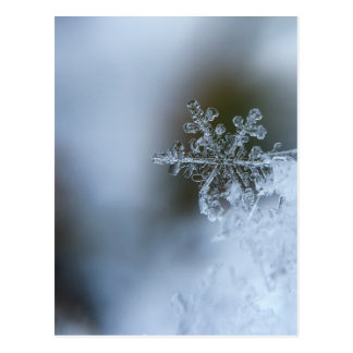 Winter Snowflake Postcard