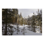 Winter Snowy Mountain Scene in Montana Poster