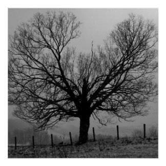 winter solitude posters