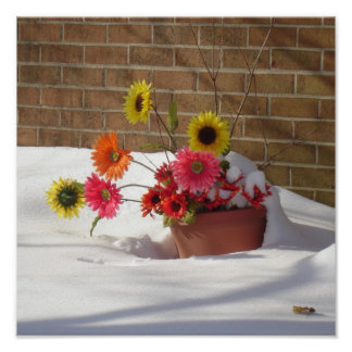 Winter Spring Daisies Poster