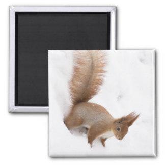 Winter Squirrel 2 Inch Square Magnet
