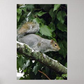 Winter Squirrel #2 Print