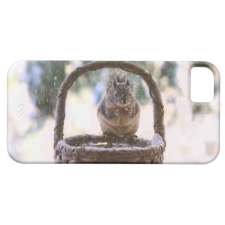 Winter Squirrel in Snow iPhone 5 Cover