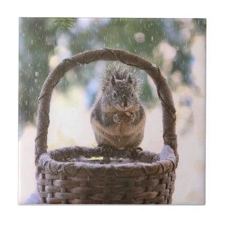 Winter Squirrel in Snow Tile