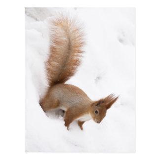 Winter Squirrel Postcard