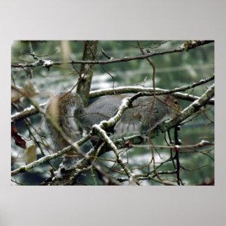 Winter Squirrel Print