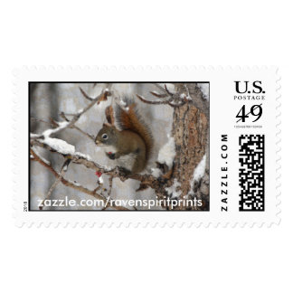 Winter Squirrel, Snow & Red Berries Xmas Design Stamps