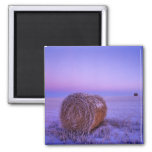 Winter Straw Bales near Cartwright North 2 Inch Square Magnet