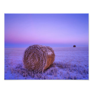 Winter Straw Bales near Cartwright North Photo Print