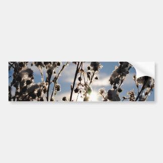 Winter sun bumper sticker
