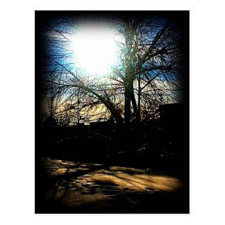 Winter Sun Postcards