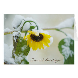 Winter Sunflower Card