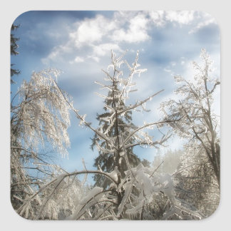 Winter sunlight square sticker