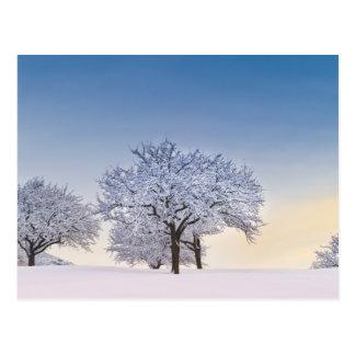 Winter sunrise postcard