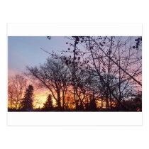 Winter Sunrise Postcard