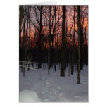 wisconsin, winter, woods, forest, snow, sunset,