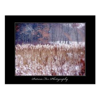 Winter Swamp - Postcard