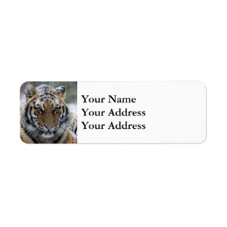Winter Tiger Face Label