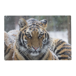 Winter Tiger Face Placemat