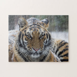 Winter Tiger Face Puzzle
