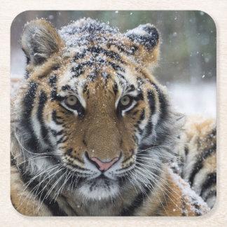 Winter Tiger Face Square Paper Coaster