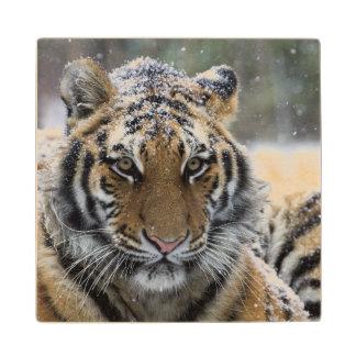 Winter Tiger Face Wooden Coaster