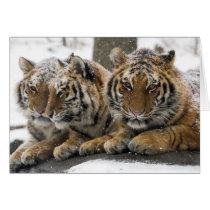 Winter Tigers Card
