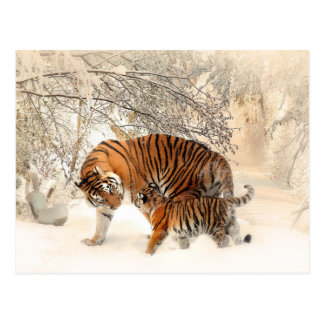 Winter Tigers postcard