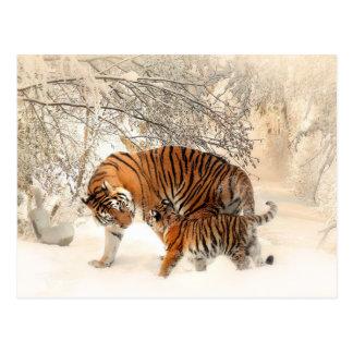 Winter Tigers postcard