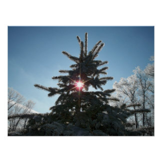 Winter Time Blue Spruce Poster
