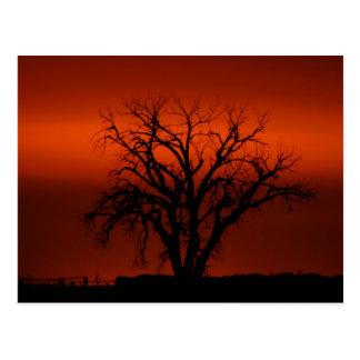 Winter tree at sunset in S. Korea Postcard