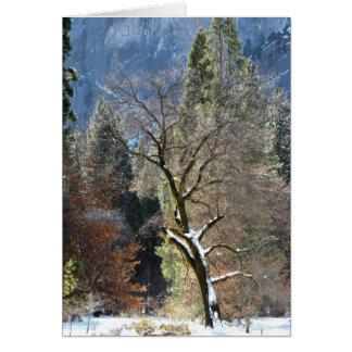 Winter Tree in Yosemite Valley Card