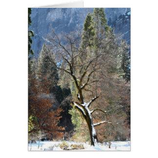 Winter Tree in Yosemite Valley Cards