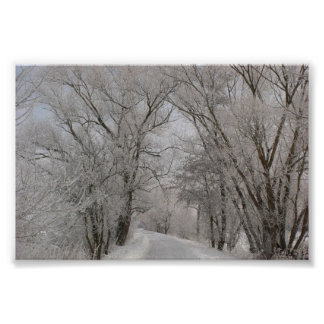 Winter Tree Lined Street Poster