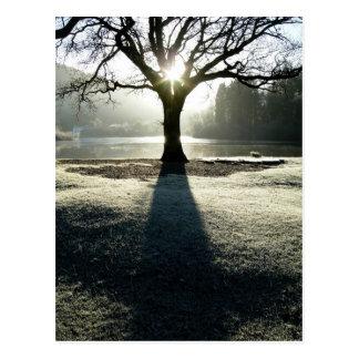Winter Tree of Light at Derwentwater Postcards