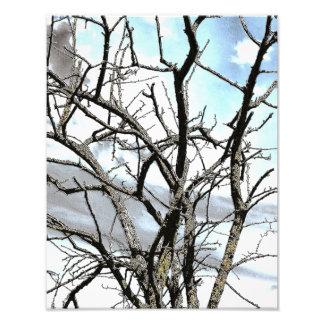 WINTER TREE PHOTO PRINT