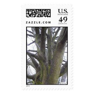 Winter Tree Postage Stamp