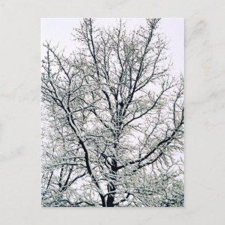 Winter Tree Postcard postcard