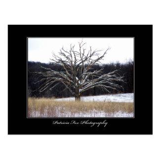 Winter Tree - Postcard