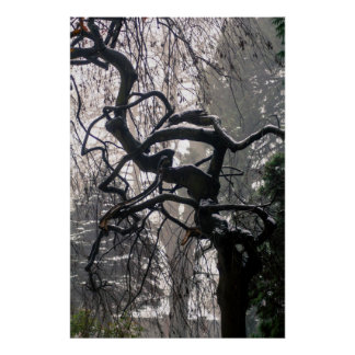Winter Tree poster print