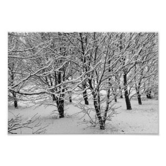 Winter Trees 16x11 Poster