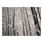 "Winter trees 6.5"" x 8.75"" invitation card"