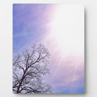 Winter Trees & A Cold Sun Seasonal Nature Art Photo Plaques