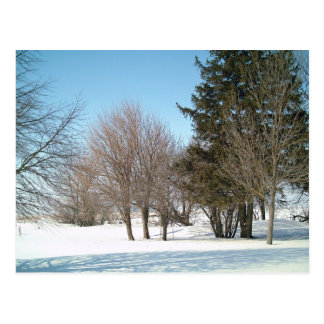 Winter Trees and Shrubs in Iowa Postcard