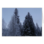 Winter Trees at Dawn Snow Landscape Photography Card