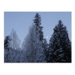 Winter Trees at Dawn Snow Landscape Photography Postcard