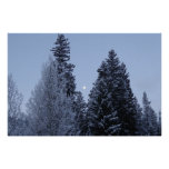 Winter Trees at Dawn Snow Landscape Photography Poster