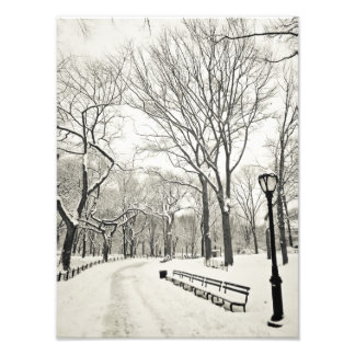 Winter Trees Covered in Snow Photograph