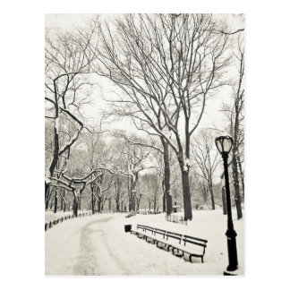 Winter Trees Covered in Snow Postcard