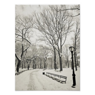 Winter Trees Covered in Snow Poster